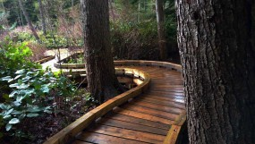 New boardwalk extension through southeastern grove at Camosun Bog. Photo: Naomi Reichstein