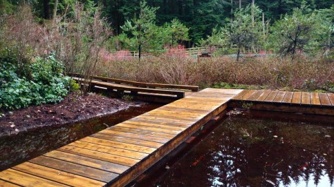 Camosun Bog boardwalk extension takes you right to the water's surface. Photo: Naomi Reichstein