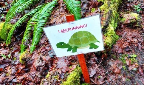Turtle sign for Chuckanut 50k race. Photo: Naomi Reichstein
