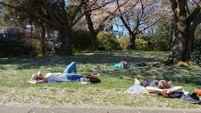 Sunbathing in Sutcliffe Park. Photo by Lex Dominiak.
